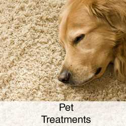 Pet-Treatments
